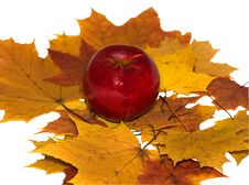 Free Apple On Maple Leaves Royalty Free Stock Photos - 16800168