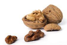 Free Walnut Stock Photo - 16800210