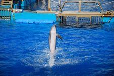 Free Dolphin Stock Photo - 16800340