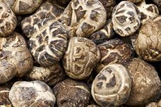 Free Close Up Dry Mushrooms Stock Photos - 16800763