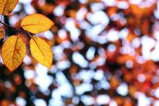 Free Autumn, Colorful Leaves Stock Photo - 16800890