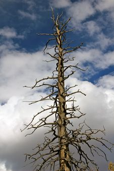 Free Burnt Tree Stock Photo - 16801620
