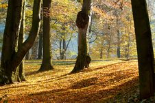 Autumn Morning With Sun And Shadows In Park Stock Photography