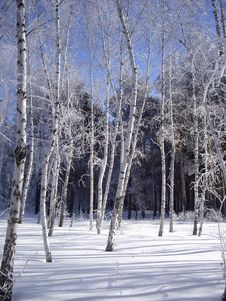 Free Hoar-frost Royalty Free Stock Image - 16802236