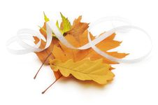 Free Autumn Different Leaves Royalty Free Stock Photos - 16804028