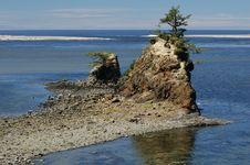 Free Low Tide Tree Royalty Free Stock Photo - 16804695