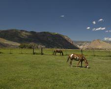 Free Ponies Stock Photo - 16804910