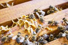 Free Working Bees Royalty Free Stock Images - 16805389