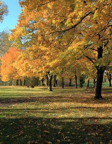 Free Autumn Colors. Stock Image - 16805981