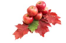 Free Autumnal Fruit Composition. Stock Image - 16805991