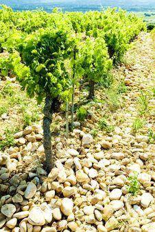 Vineyards Of Provence, France Stock Photo