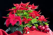 Free Christmas Still Life Royalty Free Stock Images - 16806529