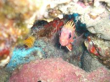 A Little Coloured Fish In His Hideout Royalty Free Stock Photography