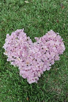 Free Flower Heart Stock Image - 16808781