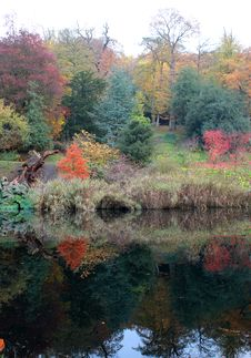Free Reflection Of Autumn Leaves In A Lake Stock Image - 16808971