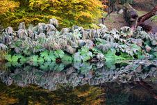 Free Reflection Of Large Wilted Leaves In A Lake Stock Photo - 16809240