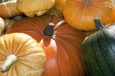 Free Pumpkins Royalty Free Stock Image - 16809356