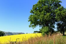 Free Big Oak In Countryside Stock Images - 16809674