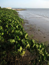 Free Vegetation Bay Stock Photos - 16815333