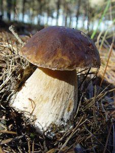 Free Mushroom Stock Image - 16811861