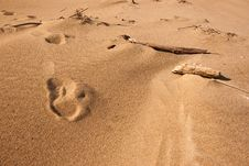 Free Footsteps On The Beach Stock Photography - 16812132