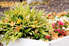 Free Autumn Flowerbed Royalty Free Stock Image - 16812826