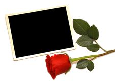 Free Old Photo And Red Rose Royalty Free Stock Photo - 16813045