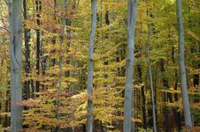Magic Autumn Stock Photo