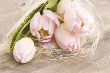 Free Pink Tulips Royalty Free Stock Photos - 16817308