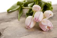 Free Pink Tulips Stock Image - 16817321