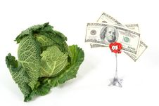 Free Savoy Cabbage And Money Stock Photography - 16818502