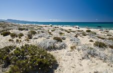 Free Sand And Flowers In A Sardinian Beach Royalty Free Stock Photography - 16818577