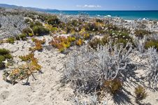 Free Sand And Flowers In A Sardinian Beach Stock Images - 16818644