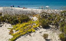 Free Sand And Flowers In A Sardinian Beach Stock Photos - 16818743