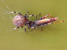 Free Spider Closeup Stock Photos - 16818833