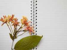 Free Pressed Dry Flower On Two Page Note Book Stock Photos - 16818993