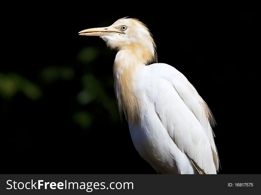 Side profile of a heron.