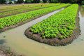 Free Vegetable Garden Royalty Free Stock Photography - 16820797