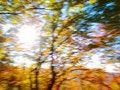 Free Autumn Forest Royalty Free Stock Photos - 16828798