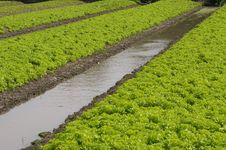 Free Vegetable Garden Stock Image - 16821321