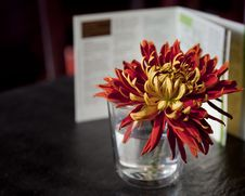 Free Flower In Glass Royalty Free Stock Photo - 16827005