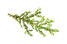 Free Fir Branch Isolated On White Royalty Free Stock Photo - 16827385