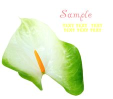 Free Beautiful Anthurium Border Royalty Free Stock Photos - 16827518