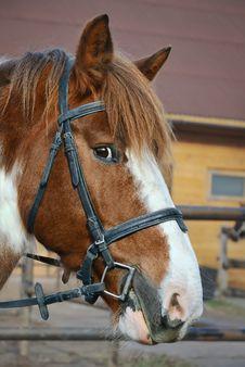 Free Horse Stock Image - 16827941