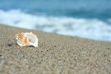 Conch At A Beach Royalty Free Stock Photos
