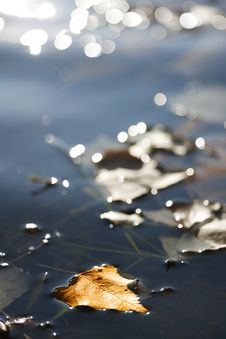 Free Autumn Leaf On Water Stock Photo - 16828680