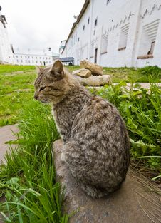 Free Cat In Solovetsky Monastery Stock Photo - 16828740