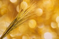Free Background Gold And Field Grass Stock Photo - 16829090