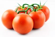 Free Tomatoes Stock Photos - 16829193