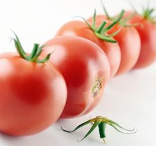 Free Tomatoes Royalty Free Stock Image - 16829286